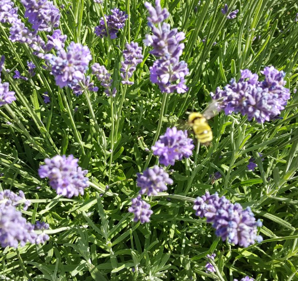 Oh, Honey!  Bees' Wonderful Gifts